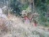 anandabanjan2008156_x500